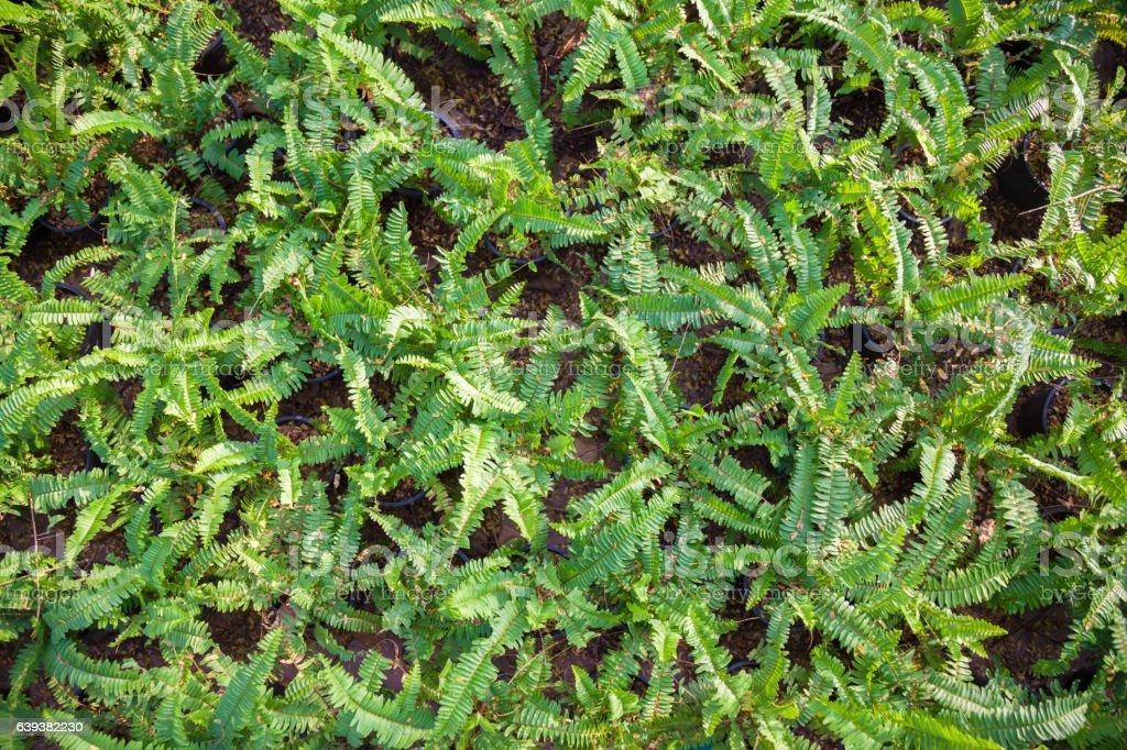 fern on ground stock photo