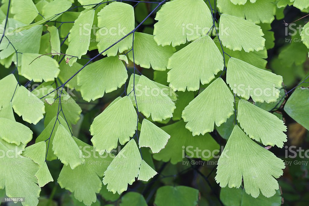 Fern plants cover the ground of natural forest. royalty-free stock photo