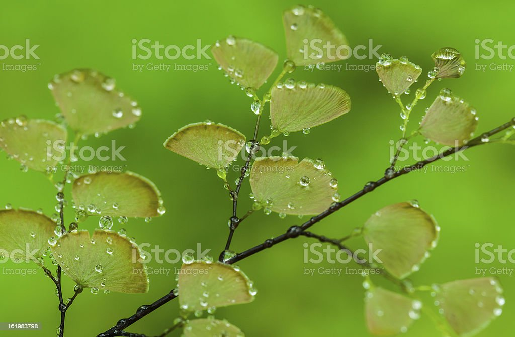 Fern plants cover the ground of natural forest royalty-free stock photo