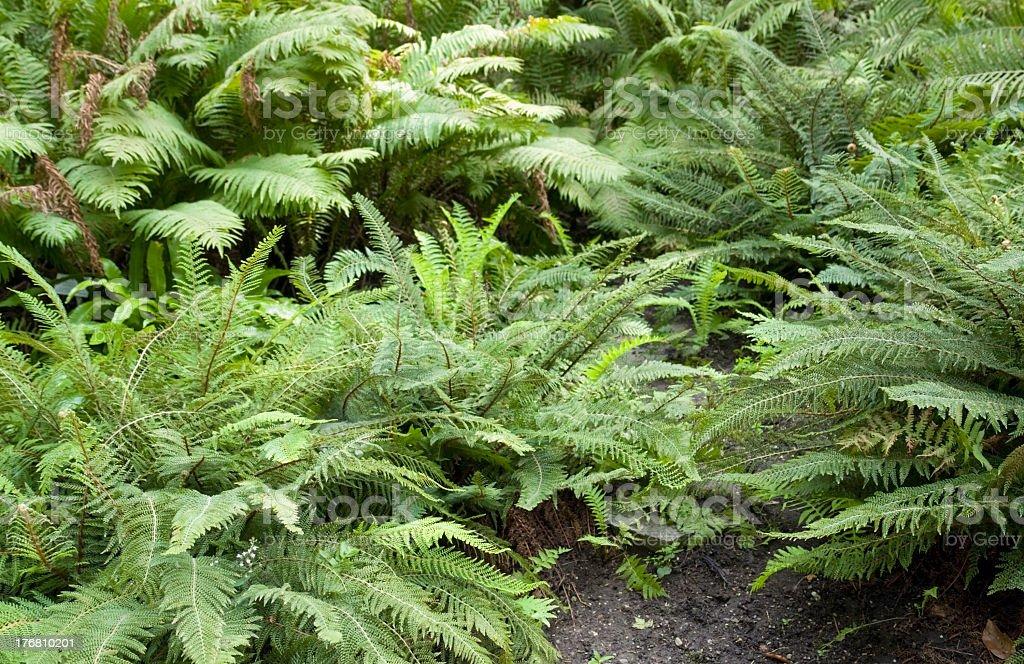 fern plants stock photo