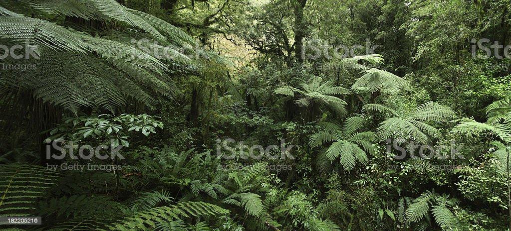 Floresta de samambaias, Nova Zelândia - foto de acervo