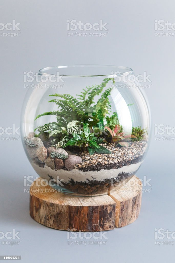 Fern Terrarium In A Round Glass Vase On Gray Background Stock Photo Download Image Now Istock