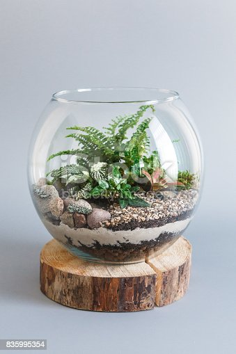 Fern terrarium in a round glass vase on gray background