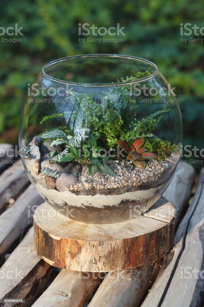 Fern Terrarium In A Round Glass Vase Stock Photo Download Image Now Istock