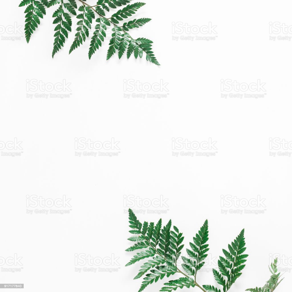 Fern Tropical Leaves On White Background Flat Lay Top View Stock