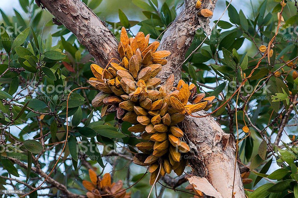Fern yellow , on a tree , Thailand . stock photo