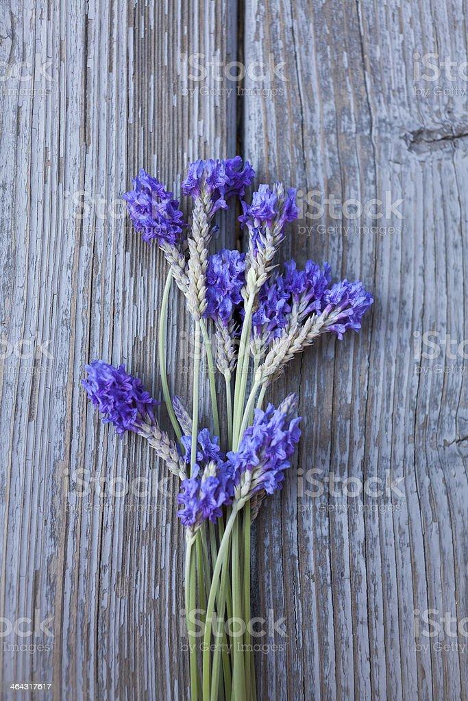 Fernleaf Lavender Flowers stock photo