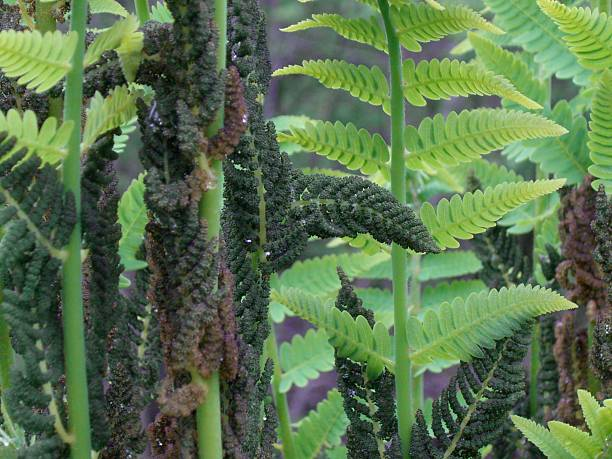 Ferns and Fronds stock photo