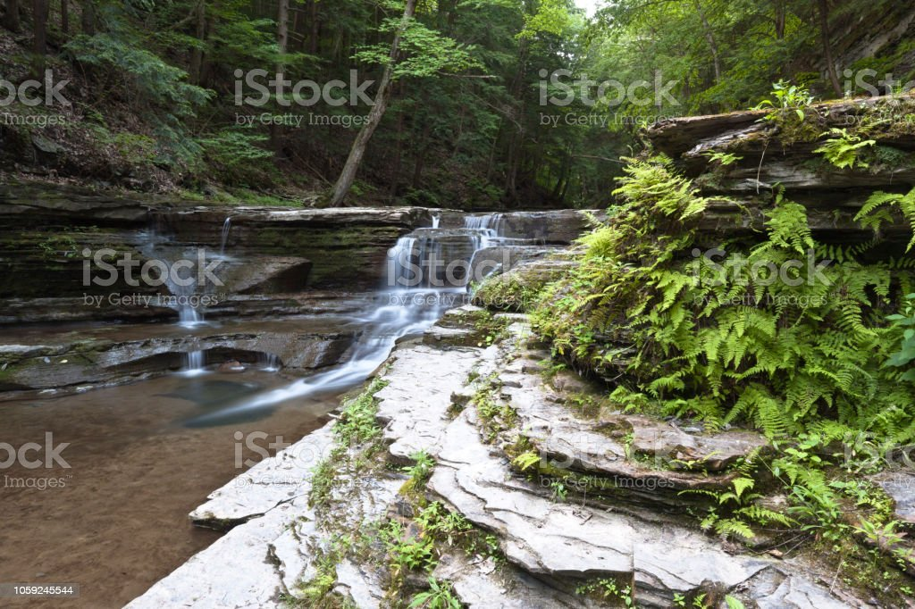 Ferns and Waterfall stock photo