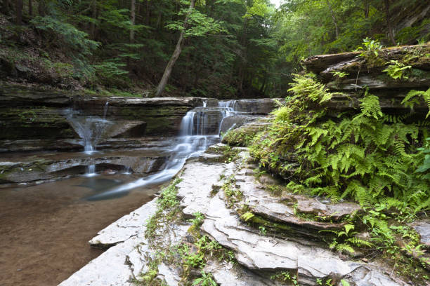 Ferns and Waterfall Ferns grow thick along the gorge walls, sharing this view of small cascades.  Summer within the gorge of Buttermilk Falls Park. michael stephen wills waterfall stock pictures, royalty-free photos & images