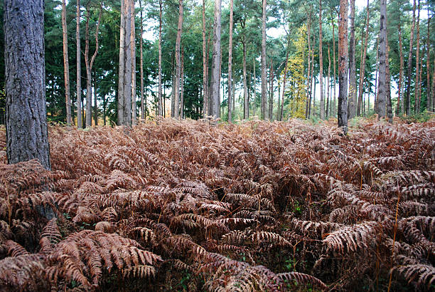 Ferns in an English wood stock photo