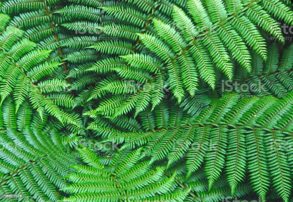 Ferns in Fiordland royalty-free stock photo
