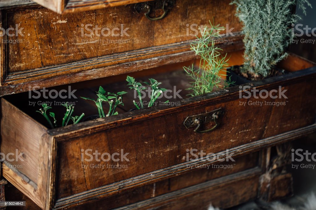 Ferns In Open Boxes Of A Vintage Chest Old Chest Of Drawers Aged Furniture Design Stock Photo Download Image Now Istock