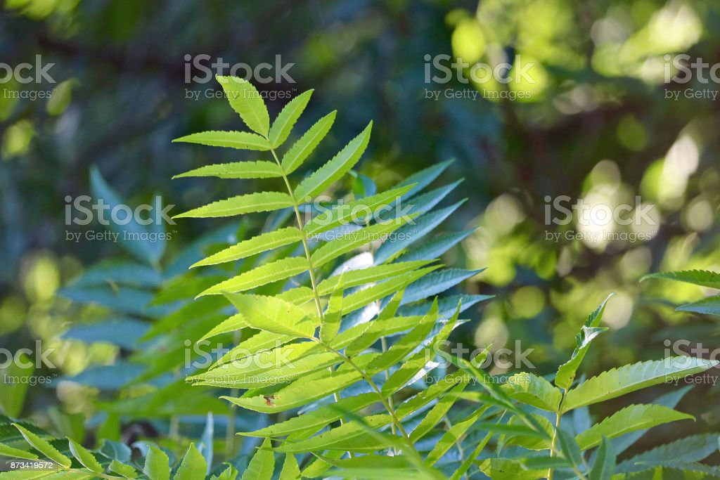 Ferns in the Sunlight stock photo