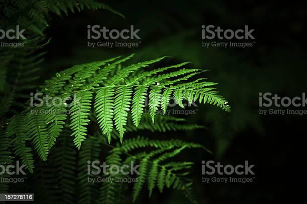 Photo of Ferns