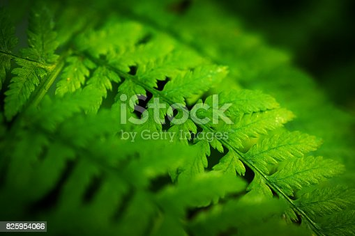 Close-up of ferns in the forest.