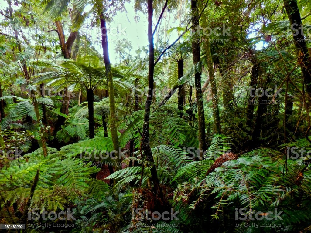 Ferny glade in the Great Dividing Range, Victoria royalty-free stock photo