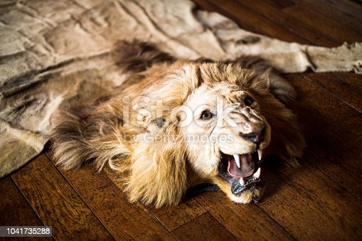 Color image depicting a dead lion that has been hunted and killed to be made into a rug for rich people. The lion's head is intact and it appears to be roaring in a fearsome manner. The rug is lying on oak floorboards. Room for copy space.