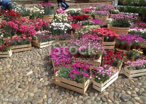 Ferrara multicolour flowers market in the old town, near the castle
