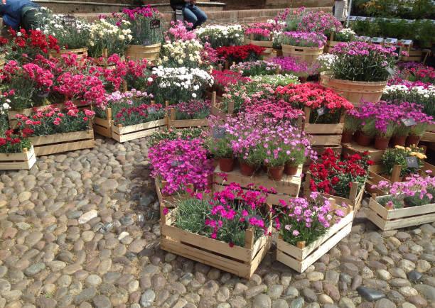 Ferrara multicolour flowers market in the old town - foto stock