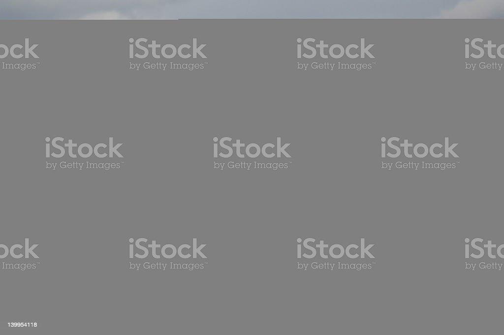 ferret posing stock photo