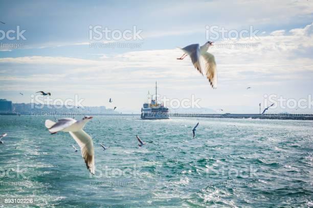 Ferries in istanbul and the seagulls picture id893102226?b=1&k=6&m=893102226&s=612x612&h=yutbp7bwvtuxuaydyhh6yqwdekgpqxq3adhq cde7pc=