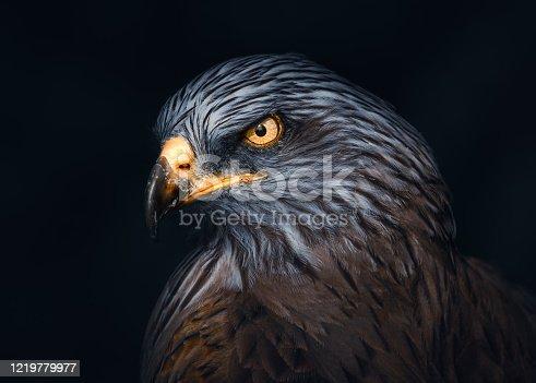 istock Ferruginou Hawk 1219779977
