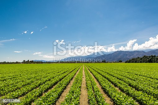 istock Fertile Agricultural Field of Organic Crops in California 507512896