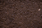 Top view of a fertile garden soil texture background, Low key DSLR photo taken with Canon EOS 6D Mark II and Canon EF 24-105 mm f/4L