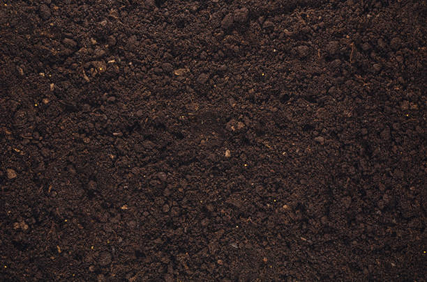 fertile garden soil texture background top view - dirt stock photos and pictures