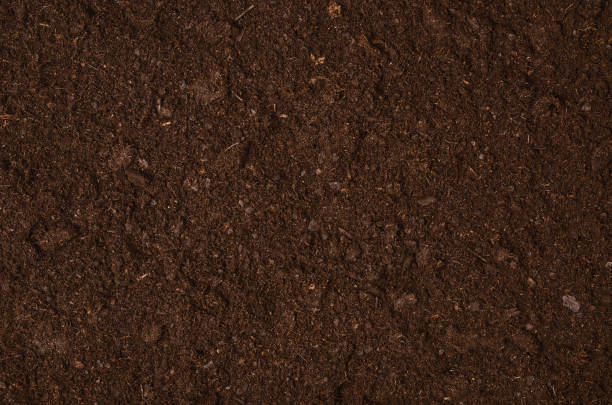 fertile garden soil texture background top view - earth stock pictures, royalty-free photos & images