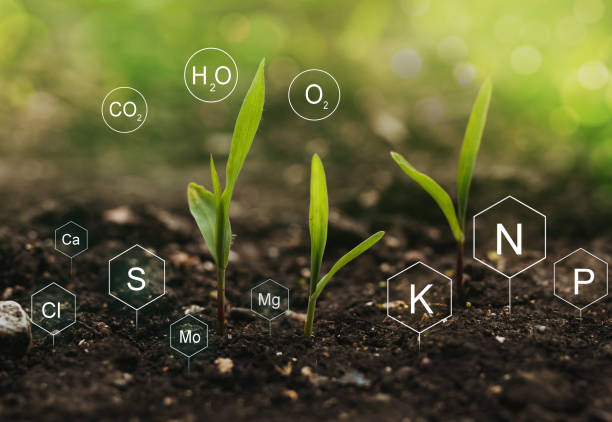 Fertilization and the role of nutrients in plant life. Soil with digital mineral nutrients icon. stock photo