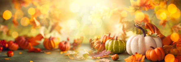festive autumn decor from pumpkins, berries and leaves. - autumn stock pictures, royalty-free photos & images