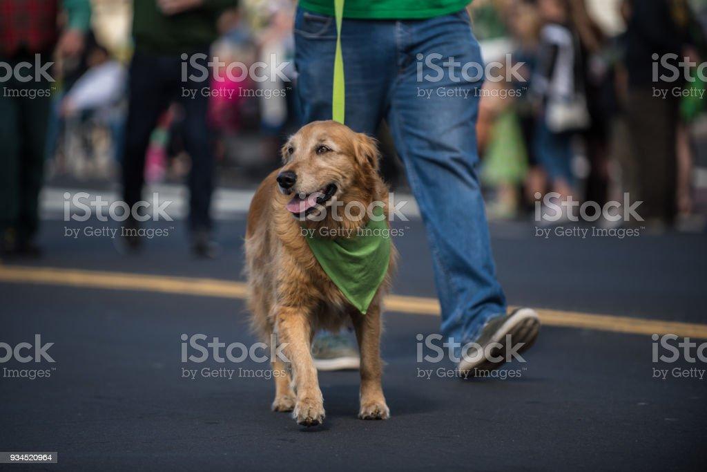 Festive dog wearing holiday costume. stock photo