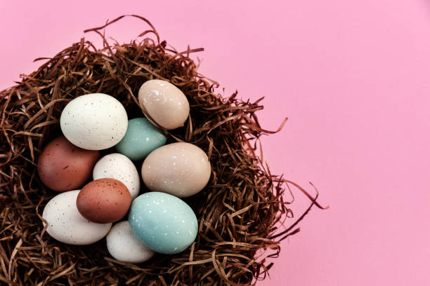 Festive Easter eggs in the nest against pink background with copy space on the right stock photo