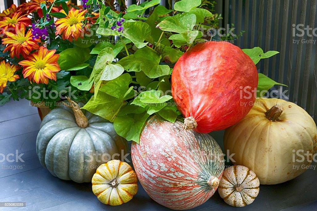 Festive Fall Display stock photo