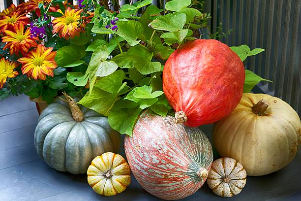 Festive Fall Display stock photo