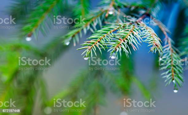 Photo of festive fir branch with shiny drops on a bright green background