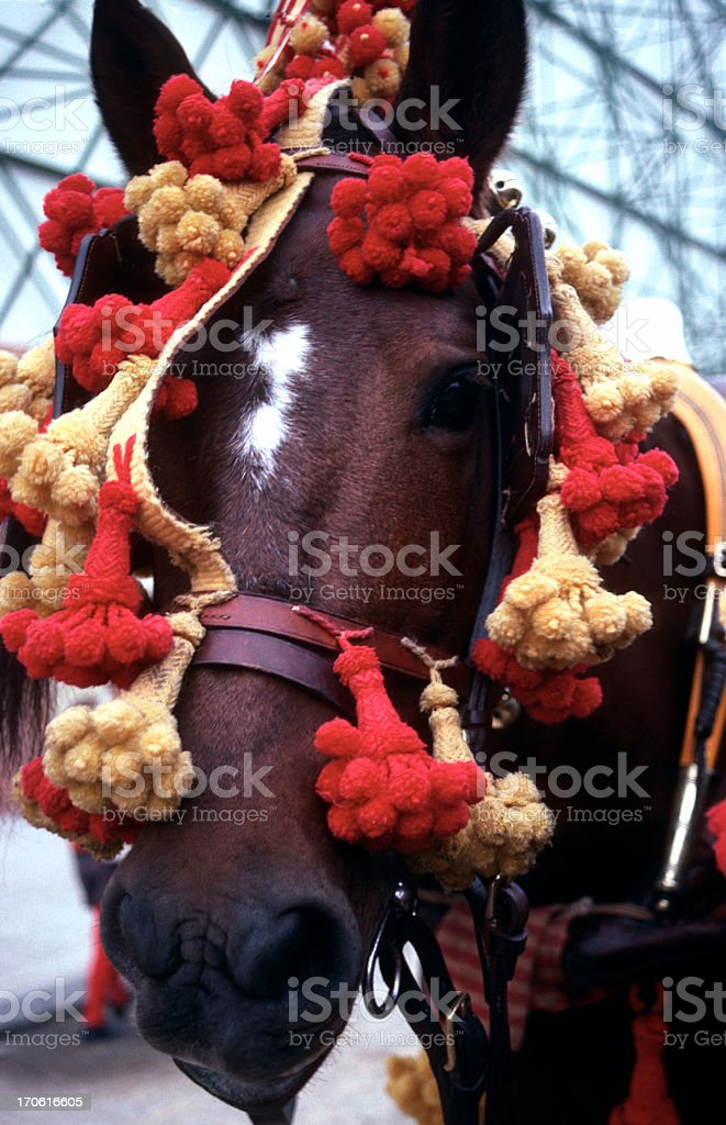 festive horse - andalusia royalty-free stock photo