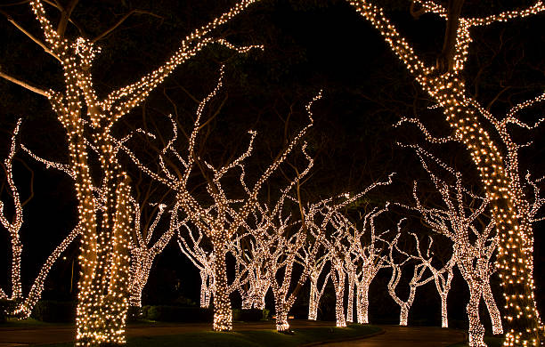 tree tree trunk christmas lights lighting equipment pictures images and stock photos