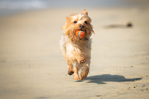 Fetch at the Beach