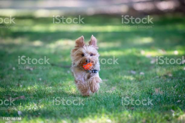 Fetch at the dog park picture id1132185188?b=1&k=6&m=1132185188&s=612x612&h=4u0kc53lwu khdysj ogdft an1mppp o6nfxvpktfo=