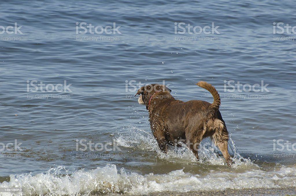 Fetch stock photo
