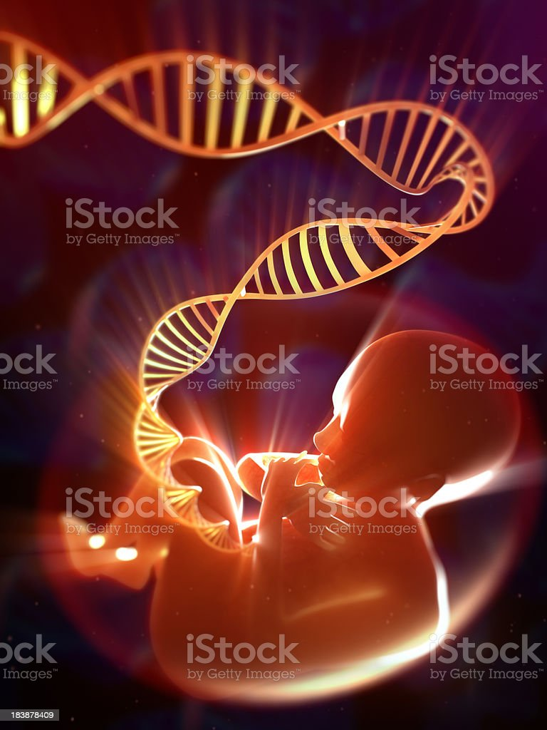 Fetus with DNA umbilical cord stock photo