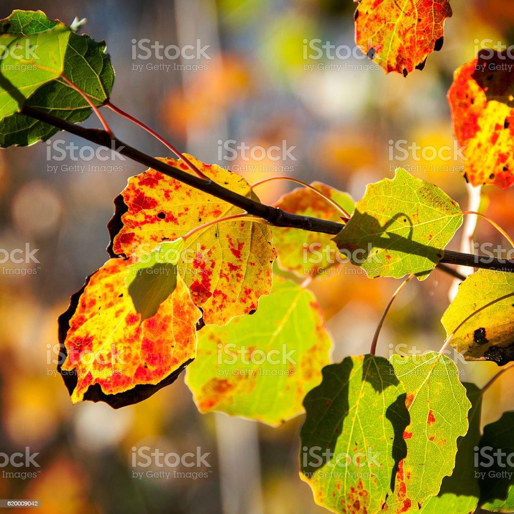 Outono de feuillage foto de stock royalty-free