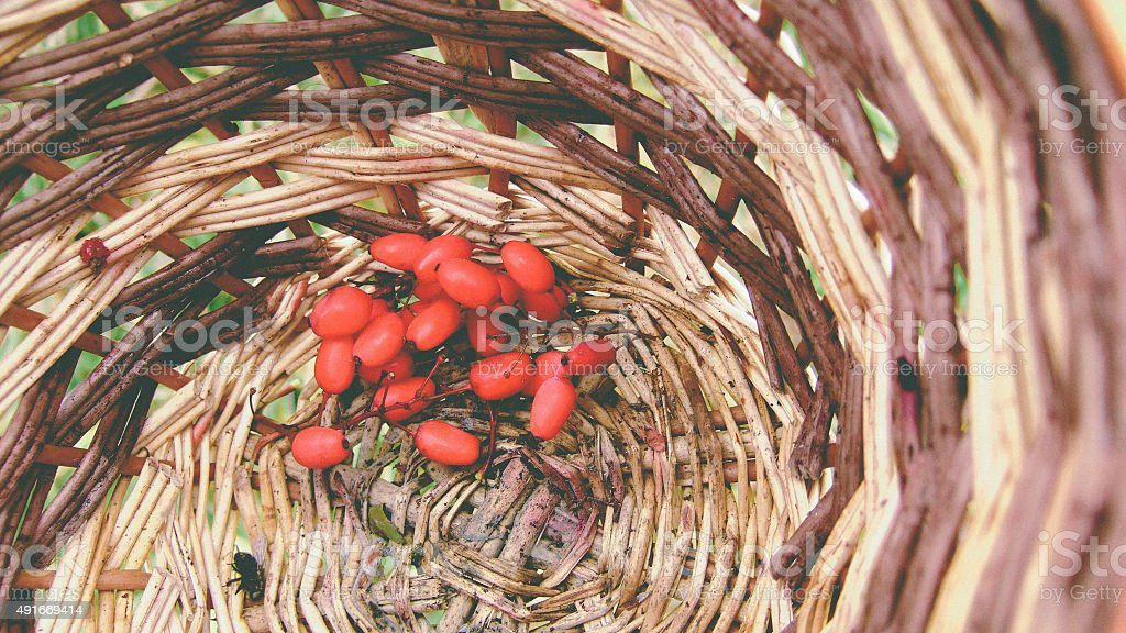 Few red barberries in a basket stock photo