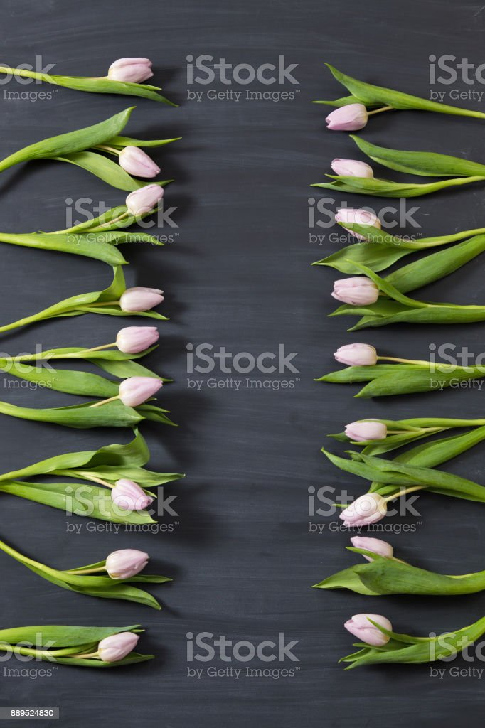 Few tulips flowers on dark chalcboard surface. Bouquet on a blur abstract background with copy space. stock photo