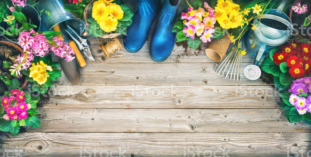 FGardening tools and spring flowers on the terrace stock photo