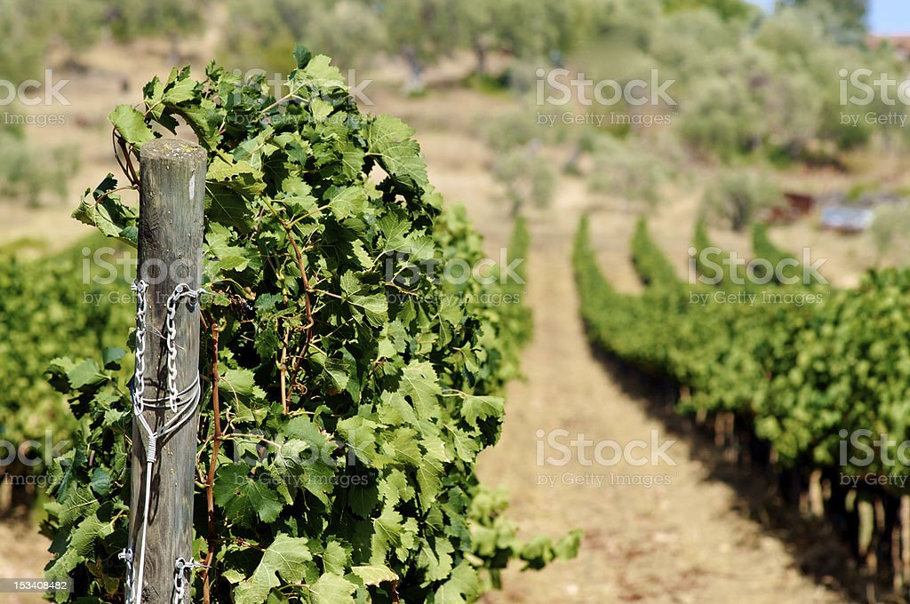 Fgreen in row royalty-free stock photo