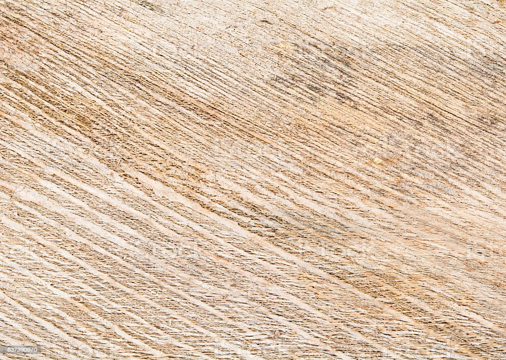 fiber coconut stock photo